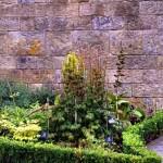 Actaea-spicata,-Veratrum,-Aconitum-Alnwick-poison-050_w