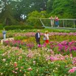 Savill Gardens - 24th June