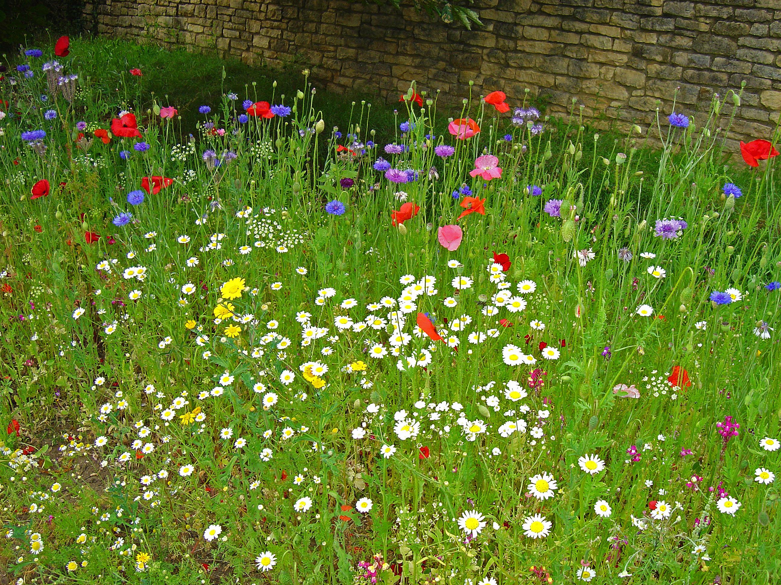 Garden Design Garden Design With Another Small Wildflower Garden - Wild flower garden